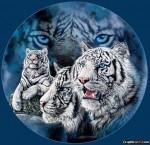 White Tiger Montage