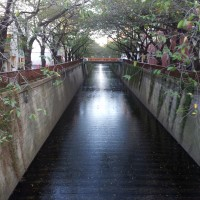 A shallow stream in Nakameguro, Tokyo, framed by cherry trees