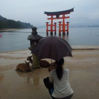 The Miyajima torii, three deer and a woman with an umbrella